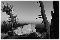 Bristlecone pine trees and cliff at dusk. Bryce Canyon National Park ( black and white)