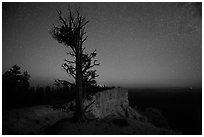 Bristlecone pine at edge of plateau at night. Bryce Canyon National Park ( black and white)