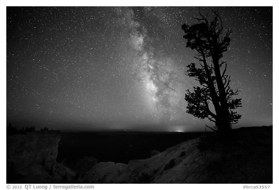Bristlecone pine and Milky Way near Yovinpa Point. Bryce Canyon National Park (black and white)