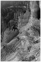 Young aspen in Bryce Amphitheater. Bryce Canyon National Park ( black and white)