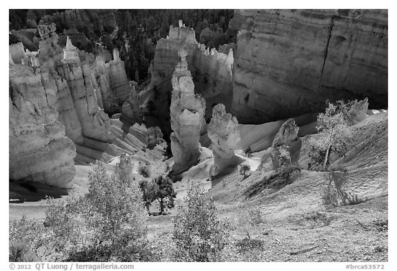 Aspen and Thors Hammer in fall. Bryce Canyon National Park (black and white)