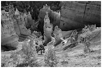 Aspen and Thors Hammer in fall. Bryce Canyon National Park, Utah, USA. (black and white)