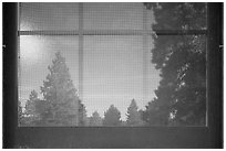 Fir trees, Visitor Center window reflexion. Bryce Canyon National Park, Utah, USA. (black and white)