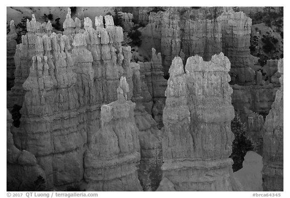 Glowing hoodoos, Fairyland Point, sunrise. Bryce Canyon National Park (black and white)