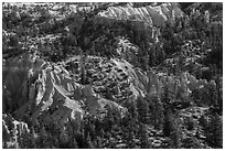 Conifers and pink rocks. Bryce Canyon National Park ( black and white)