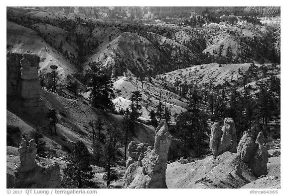 Hoodoos, eroded slopes with evergreens. Bryce Canyon National Park (black and white)