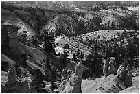 Hoodoos, eroded slopes with evergreens. Bryce Canyon National Park ( black and white)