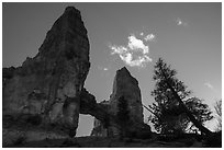 Pine trees, Tower Bridge, and cloud. Bryce Canyon National Park ( black and white)