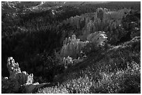 Grasses, conifers and hoodoos. Bryce Canyon National Park ( black and white)
