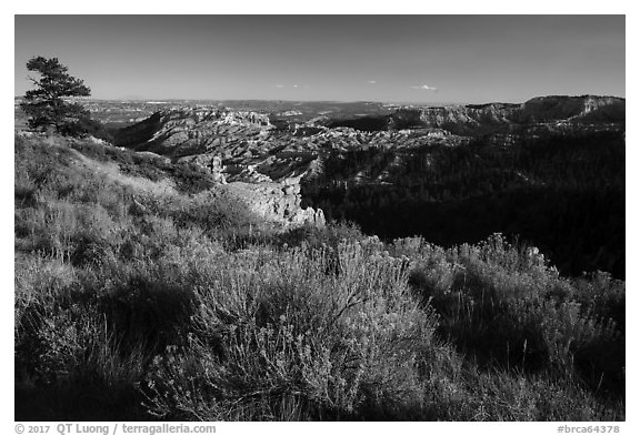 Grassy rim and amphitheater. Bryce Canyon National Park (black and white)