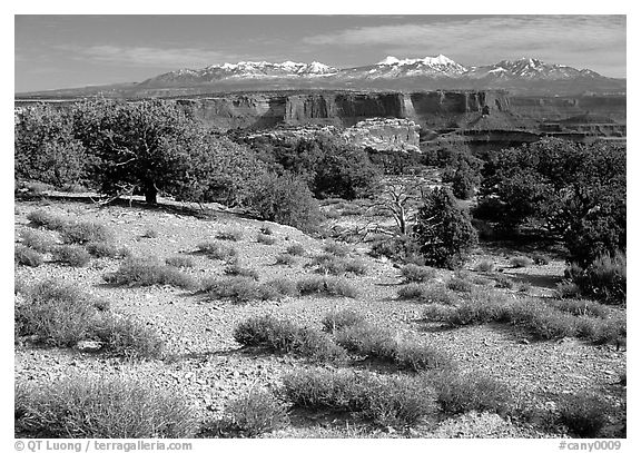 View with canyons and mountains, the Needles. Canyonlands National Park (black and white)