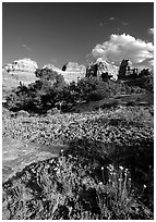 Wildflowers and sandstone towers near Elephant Hill, the Needles, late afternoon. Canyonlands National Park, Utah, USA. (black and white)