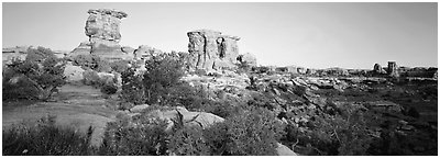 Rock spires, Needles District. Canyonlands National Park (Panoramic black and white)