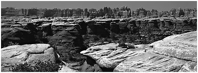 Sandstone needles near Elephant Hill, Needles District. Canyonlands National Park (Panoramic black and white)