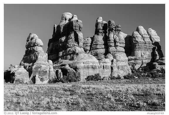 Cactus on flats and spires of the Doll House. Canyonlands National Park (black and white)