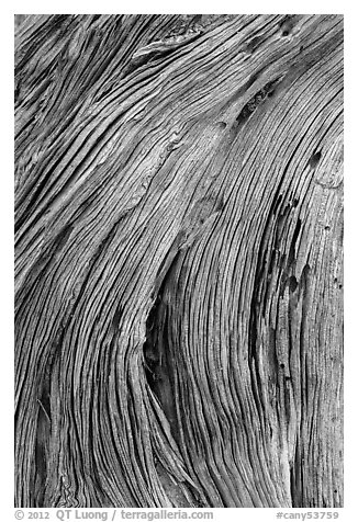 Close-up of juniper bark. Canyonlands National Park (black and white)