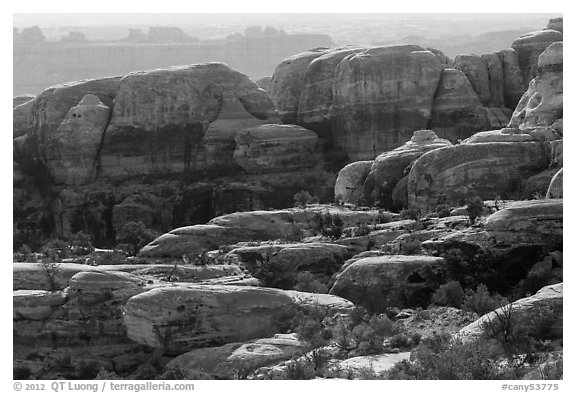 Rocks and trees, Maze District. Canyonlands National Park (black and white)