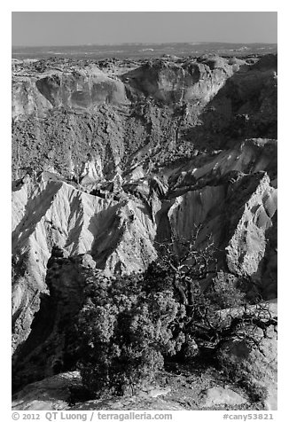 Juniper and Upheaval Dome. Canyonlands National Park (black and white)