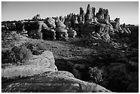 Dollhouse spires at sunrise. Canyonlands National Park, Utah, USA. (black and white)