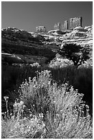 Chocolate drops seen from Maze canyons. Canyonlands National Park, Utah, USA. (black and white)