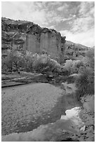 Creek, cottonwood trees in fall foliage, and cliffs, Horseshoe Canyon. Canyonlands National Park, Utah, USA. (black and white)