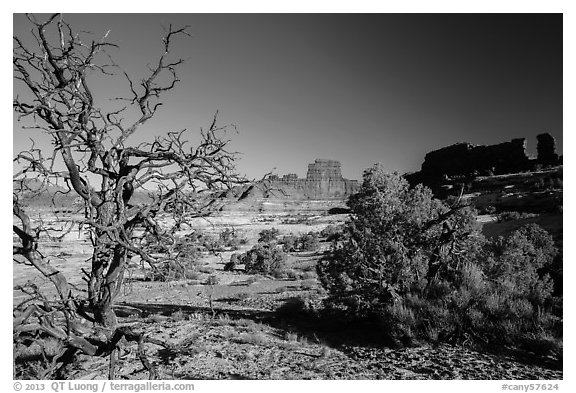 Trees below Petes Mesa, Maze District. Canyonlands National Park (black and white)