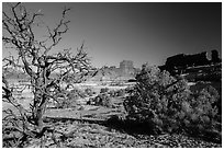 Trees below Petes Mesa, Maze District. Canyonlands National Park, Utah, USA. (black and white)
