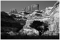 Trees below the Chocolate Drops, Maze District. Canyonlands National Park ( black and white)