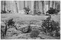 Junipers and rock walls, the Maze. Canyonlands National Park ( black and white)