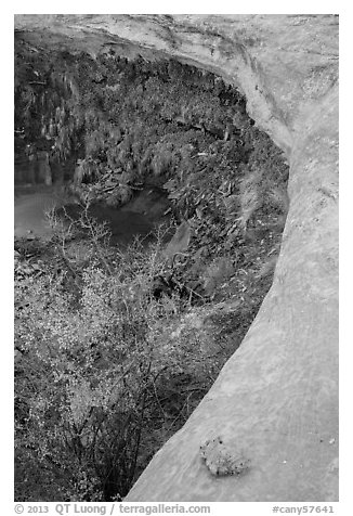 Alcove with pool and hanging vegetation, Maze District. Canyonlands National Park (black and white)