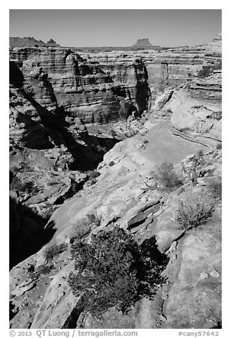 Maze canyons and Eckert Butte. Canyonlands National Park (black and white)