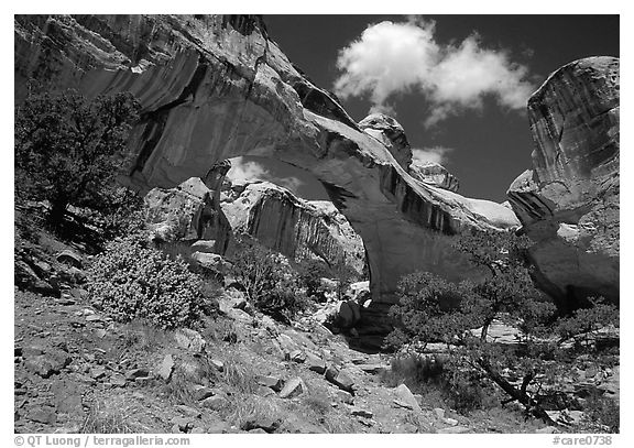 Hickman Bridge, 130 foot span. Capitol Reef National Park (black and white)