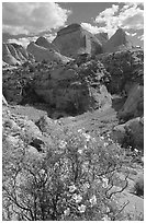 Wildflowers above Capitol Gorge. Capitol Reef National Park, Utah, USA. (black and white)