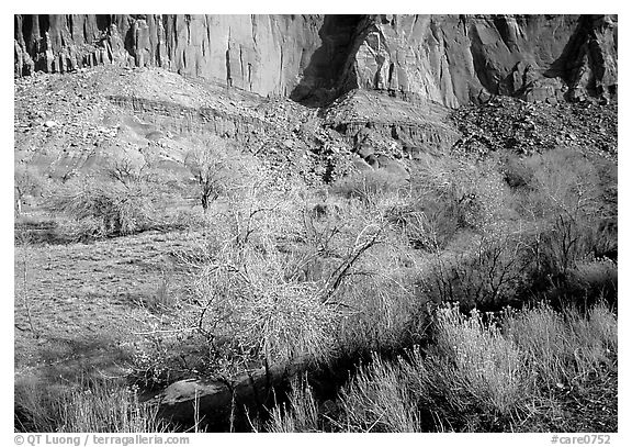 Sandstone cliffs and desert cottonwoods in winter. Capitol Reef National Park (black and white)