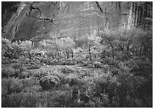 Sagebrush, trees, and cliffs with desert varnish at dusk. Capitol Reef National Park ( black and white)