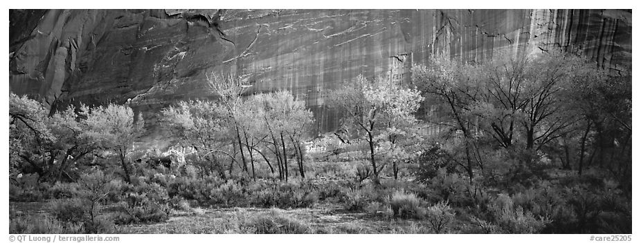 Sagebrush, trees and cliffs with desert varnish. Capitol Reef National Park (black and white)