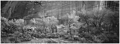 Sagebrush, trees and cliffs with desert varnish. Capitol Reef National Park (Panoramic black and white)