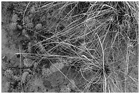 Close-up of ground with flowers, grasses and cactus. Capitol Reef National Park ( black and white)