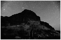 Trees and cliff by night. Capitol Reef National Park, Utah, USA. (black and white)