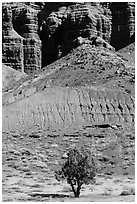 Tree and cliff near Panorama Point. Capitol Reef National Park ( black and white)