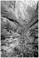 Leaves and patterned wall in Surprise canyon. Capitol Reef National Park ( black and white)