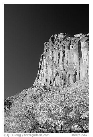 Cottonwods in fall foliage and tall cliffs near Fruita. Capitol Reef National Park (black and white)