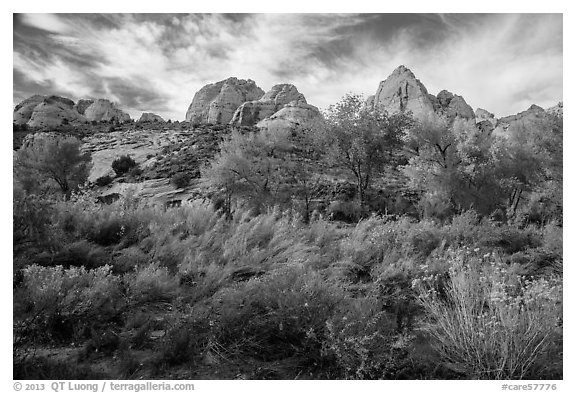 Srubs and trees in autum under white sandstone domes. Capitol Reef National Park (black and white)