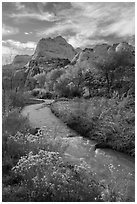 Fremont River, shrubs and trees in fall. Capitol Reef National Park ( black and white)