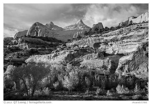 Sandstone domes tower above cottonwoods in Fremont River Gorge. Capitol Reef National Park (black and white)