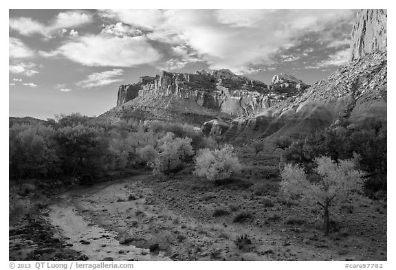 Sulphur Creek, trees in fall foliage, and Castle, Fruita. Capitol Reef National Park (black and white)