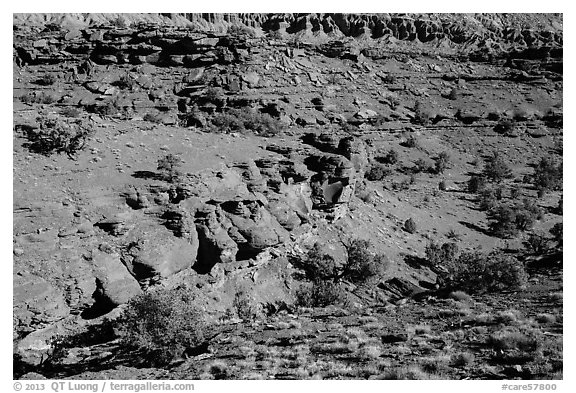 Junipers and red Moenkopi Formation sandstone. Capitol Reef National Park (black and white)
