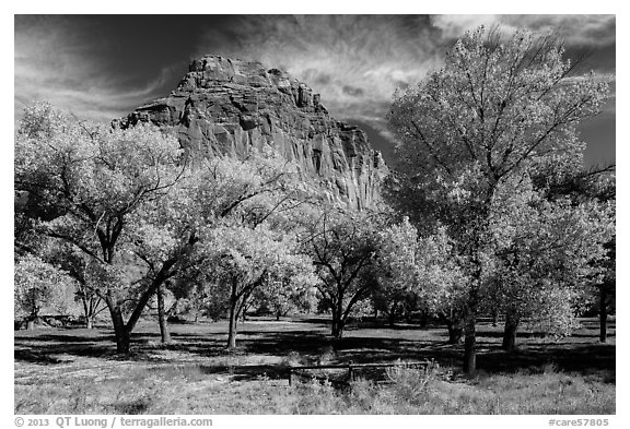 Fruita orchard and cliff in autumn. Capitol Reef National Park (black and white)