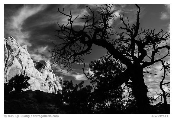 Silhouetted juniper and cliff. Capitol Reef National Park (black and white)