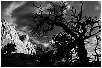 Silhouetted juniper and cliff. Capitol Reef National Park ( black and white)